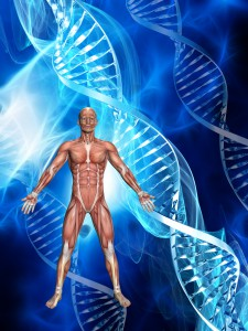 3D male figure with muscle map on medical DNA background
